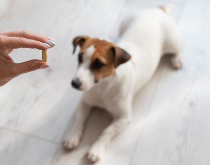 Podstawowe informacje o suplementach diety dla zwierząt